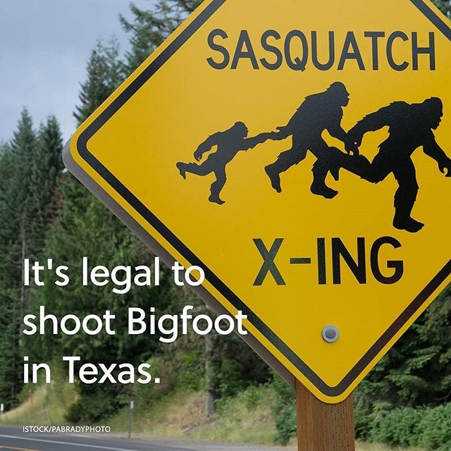 For Jay's safety, I guess we're not taking pots to Texas. #SasquatchInAUtilikilt.Repost from @mental_floss #mentalfloss #feelsmartagain #funfacts #trivia #bigfoot #sasquatch #monster #halloween - from Instagram